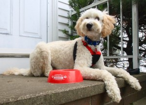 Mason with Free Pet Bowl from the Fireside Inns